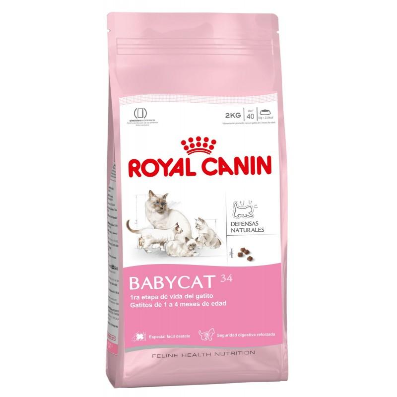 Royal Canin Babycat 1,5kg ALIMENTO PARA GATOS