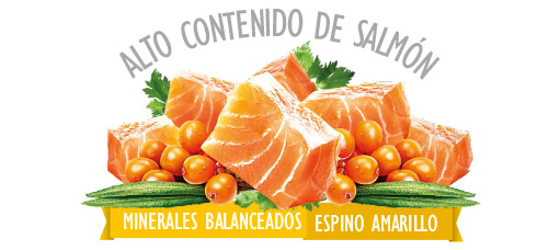 Sunny Salmon
